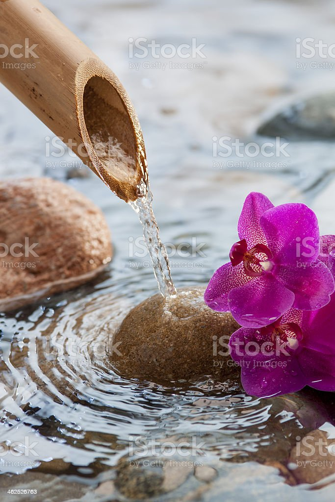 running water on stones next to beautiful flowers stock photo