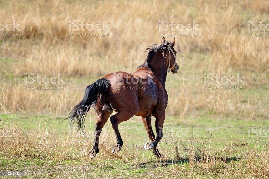 Running Wild Horse Stock Photo Download Image Now Istock