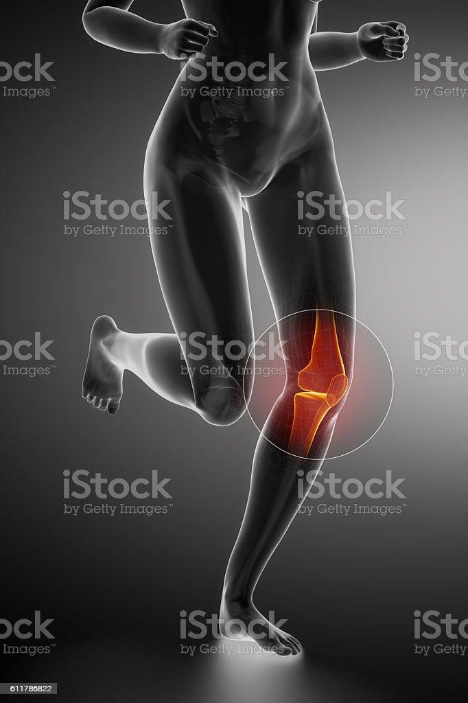 Runningfrauknie Anatomie Stock-Fotografie und mehr Bilder von ...