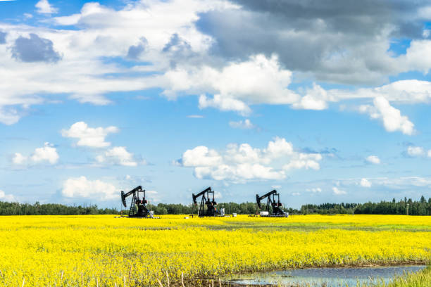 Rural Alberta canola field with oil jack stock photo