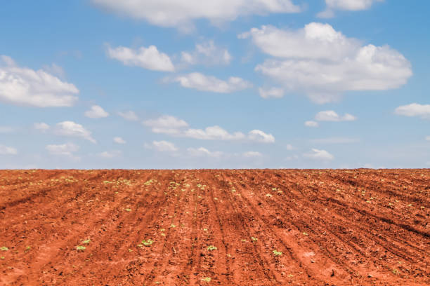 Rural area prepared for cultivation
