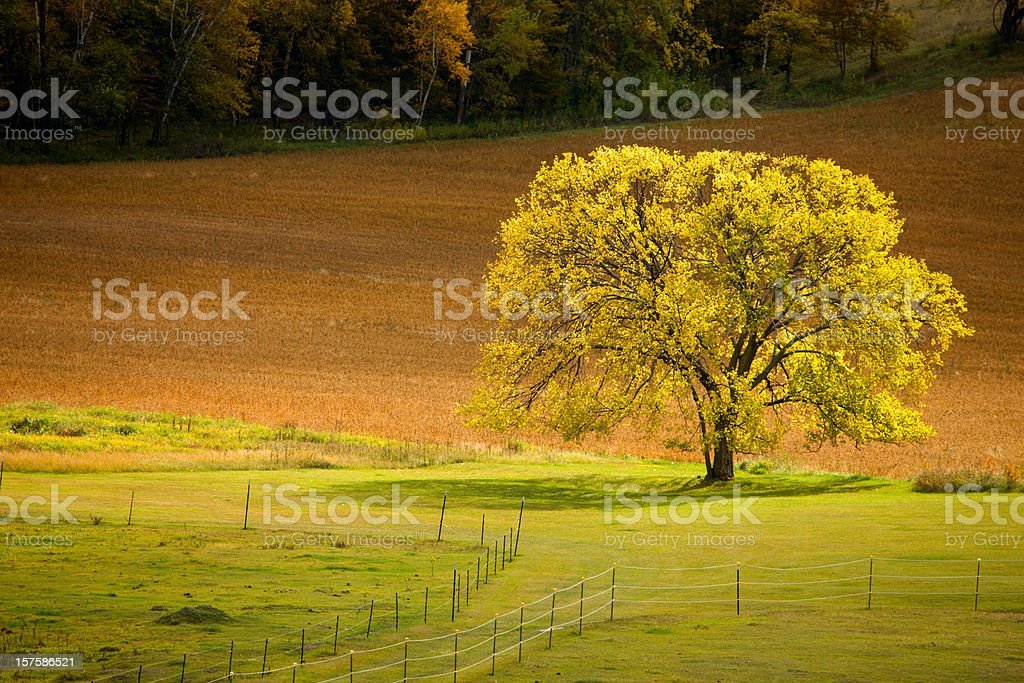 Rural Autumn scenic in the Midwest. royalty-free stock photo