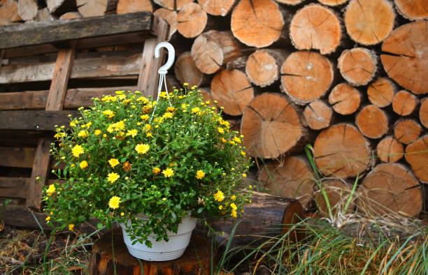 lantlig bakgrund med blommor och trä i bakgrunden - peasants woodcut bildbanksfoton och bilder