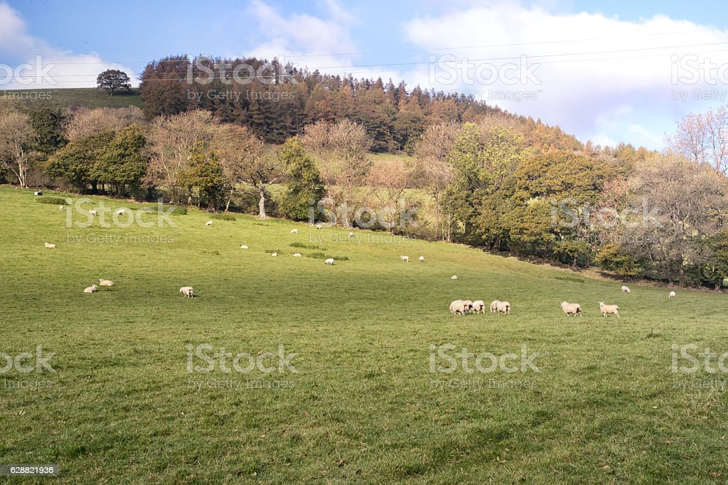 Rural British countryside green rolling fields stock photo