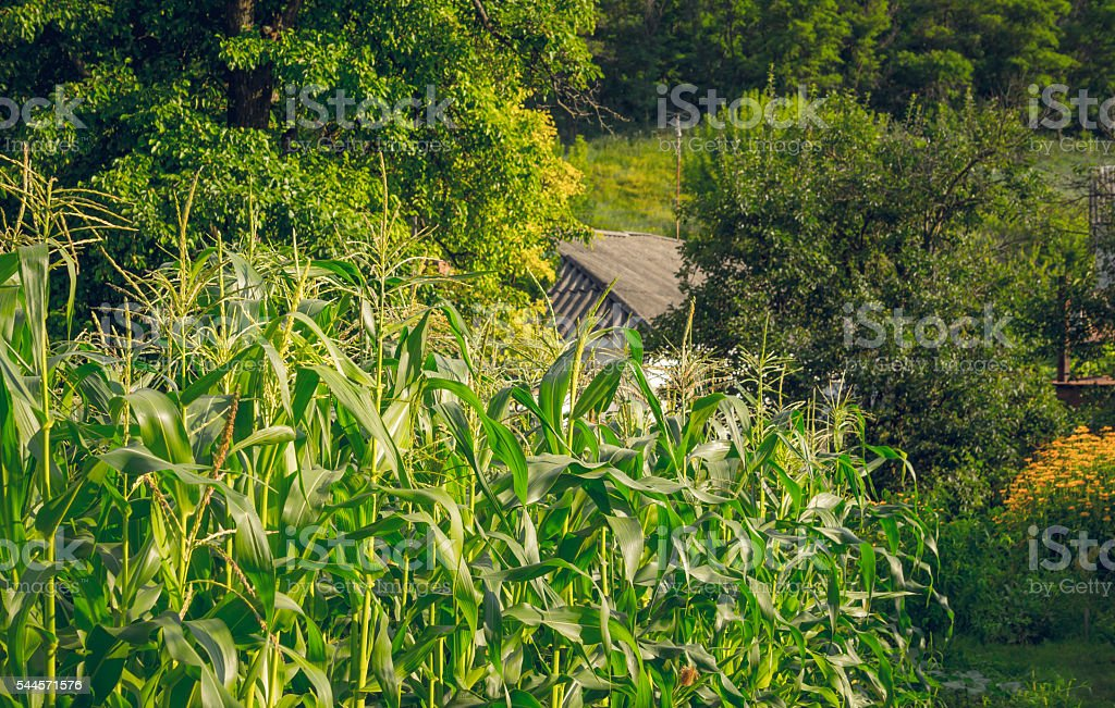 Rural Cosiness House Amidst A Welltended Garden Stock Photo - Download  Image Now - iStock