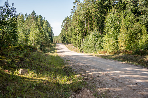 Rural Dirt Road in a Latvian Forest