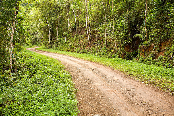 Rural dirt road in the forest stock photo