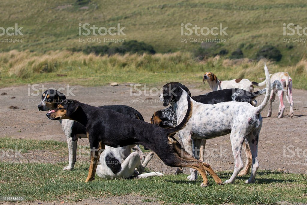 Rural Dogs stock photo
