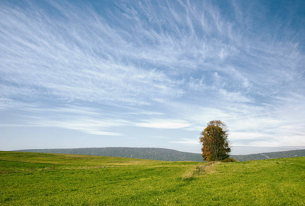 Rural; Empty land stock photo