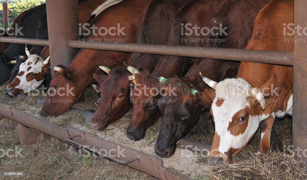 Сельских фермерских с всех кантонах стоковое фото