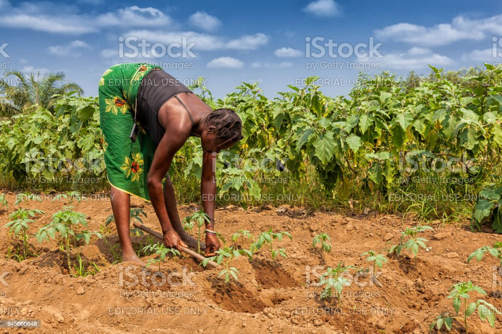 Rural farmer to till land in Cabinda. Angola, Africa. stock photo