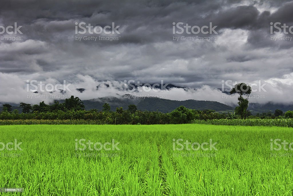 Rural Farmland in Thailand royalty-free stock photo