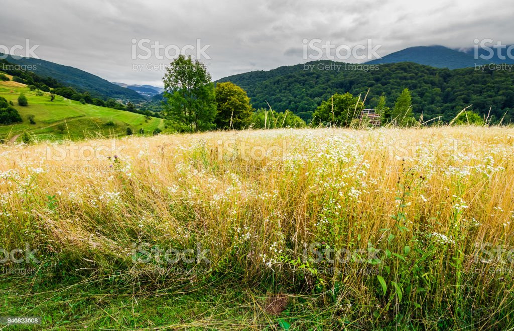 rural field on hillside in mountains stock photo