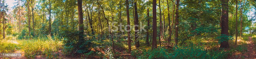639809128istockphoto rural german forest in beautiful colors 1162466313