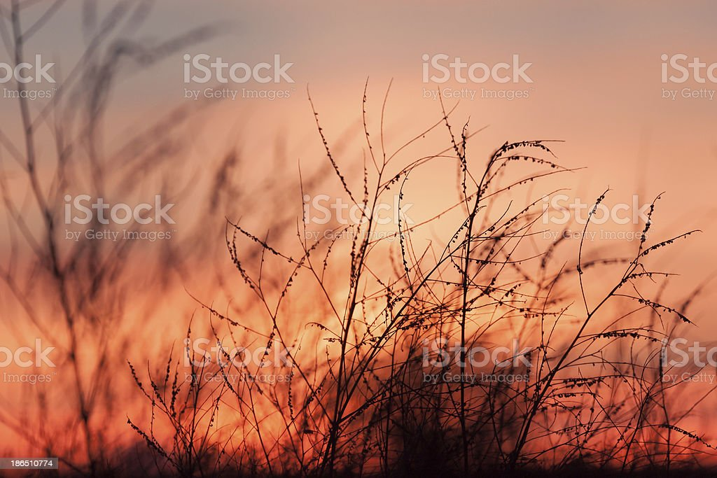 Rural grass and sunset sky royalty-free stock photo