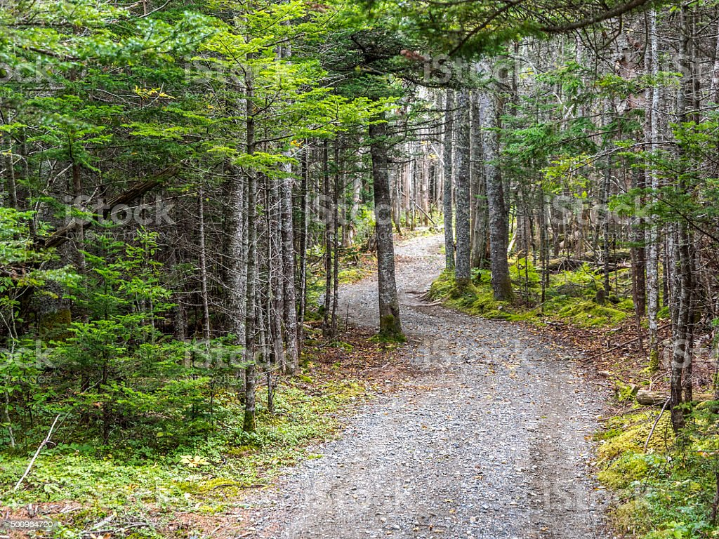 Rural Gravel Path in Forest Coastal Maine Trees on Sides stock photo