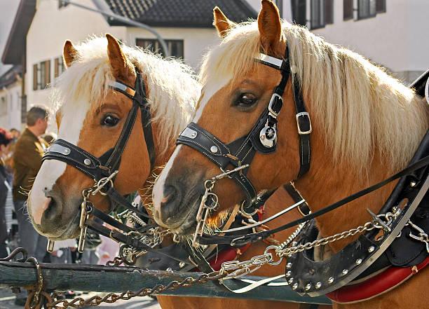 Rural cheval parade - Photo
