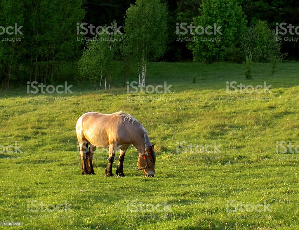 rural horse stock photo
