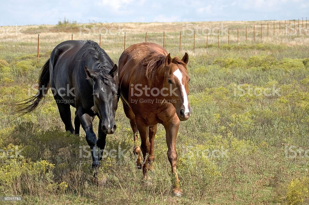 Rural - Horses 1 stock photo