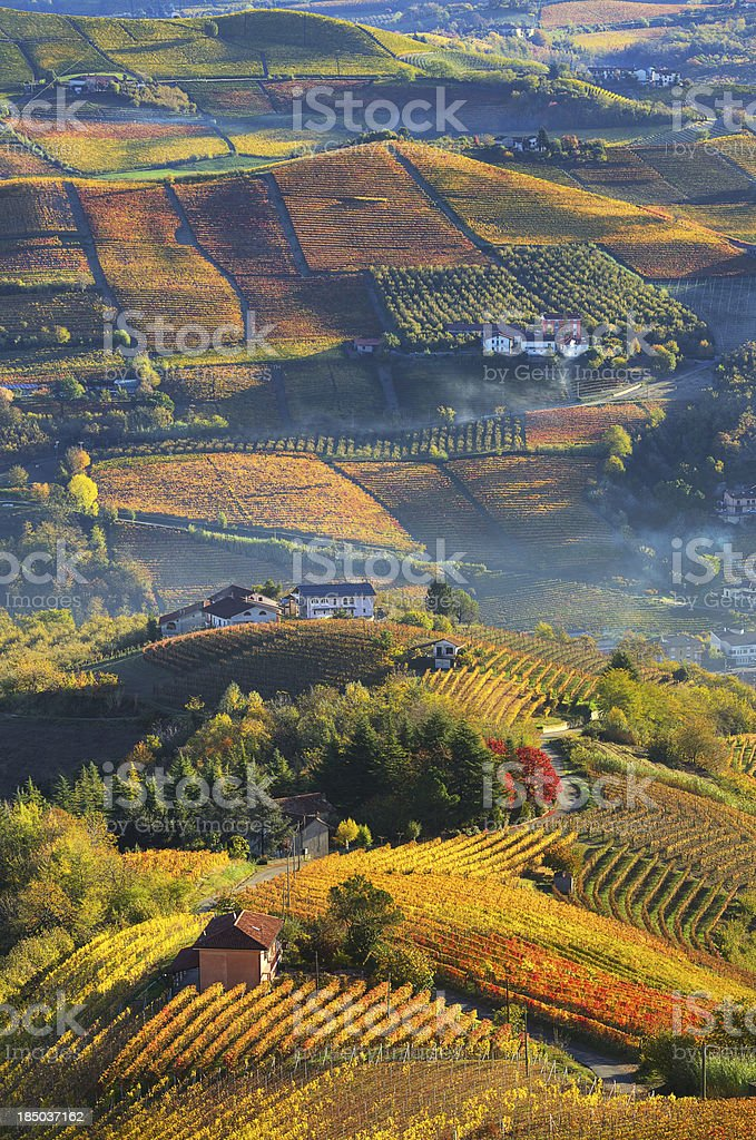 Rural houses and autumnal vineyards in Piedmont, Italy. stock photo