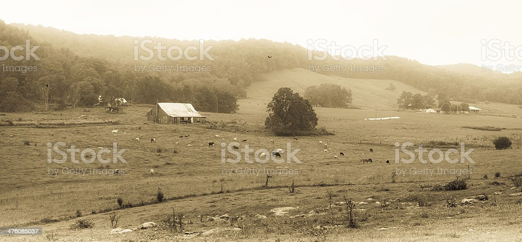 Rural Kentucky farm during a foggy afternoon stock photo