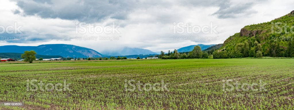 rural land with planted crop panorama stock photo