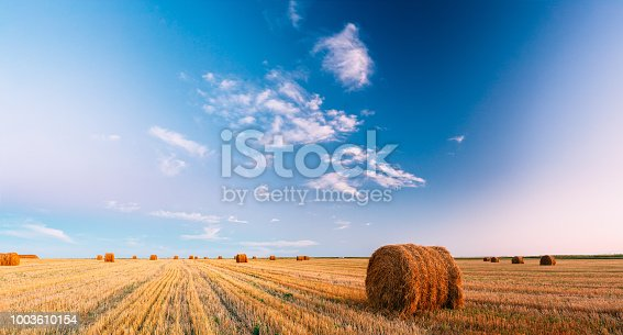 Panoramic Rural Landscape Field Meadow With Hay Bales After Harvest In Sunny Evening At Sunset In Late Summer. Blue Sunny Sky.