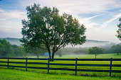 A fence and farmland in central Florida near Orlando at dawn.
