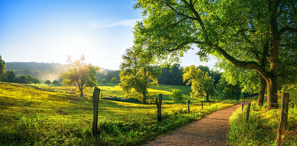 Rural landscape with a path, trees and meadows on hills, blue sky and pleasant warm sunshine from the low sun