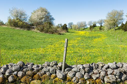 Rural landscape in spring with flowering meadow