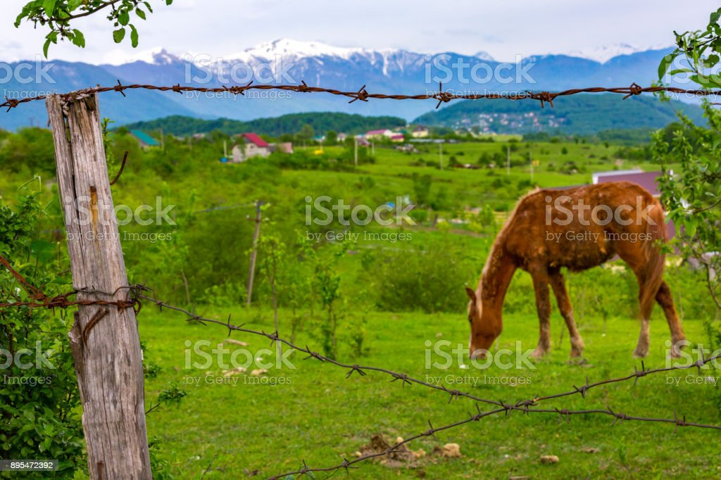 Rural landscape in the background of mountains. stock photo