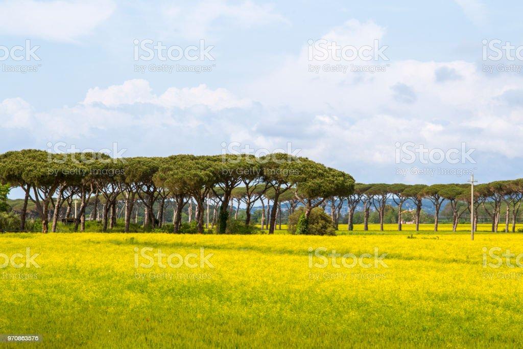 Kulturlandschaft in der italienischen Toskana – Foto