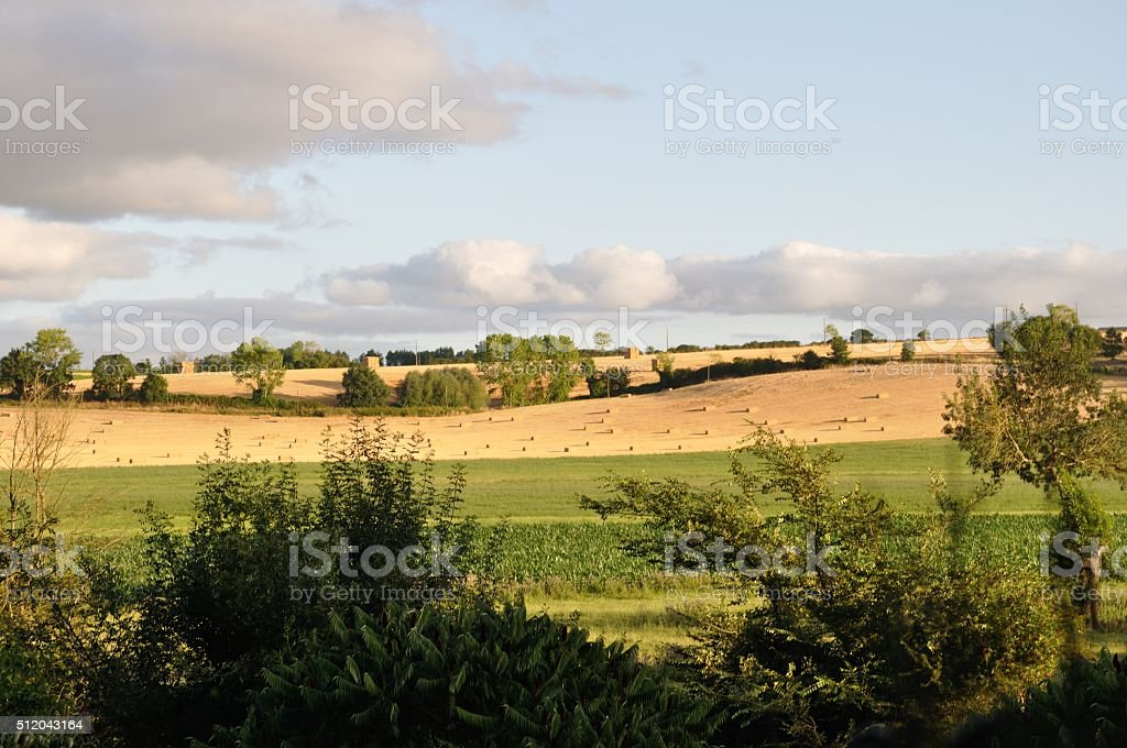 Rural landscape in the Layon stock photo