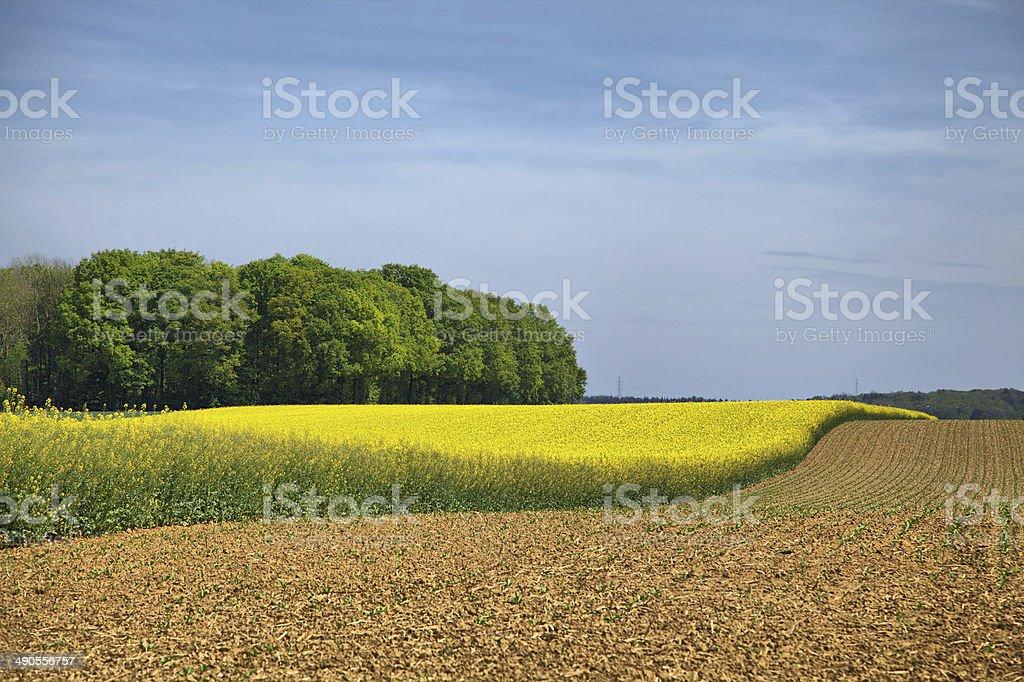 Paysage Rural dans Wallonie - Photo