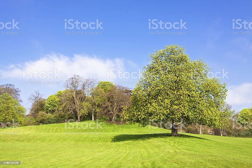 Rural Landscape, lonely thee on top of the hill royalty-free stock photo