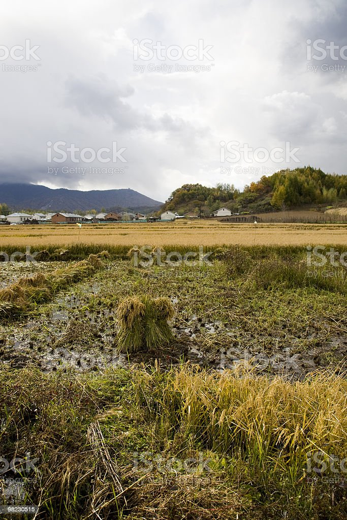 rural landscape of farmland and village royalty-free stock photo