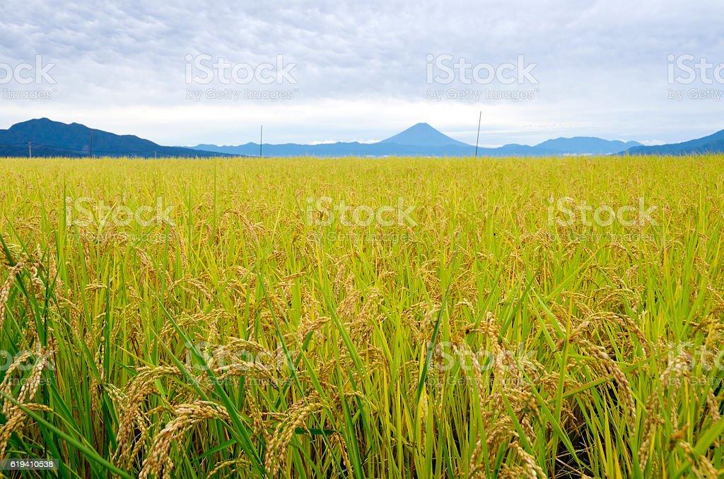 Rural landscape of Japan stock photo