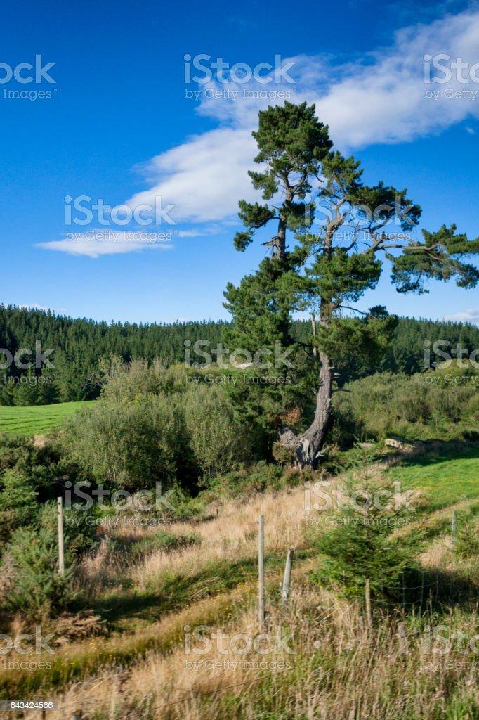 Rural Landscape of New Zealand stock photo