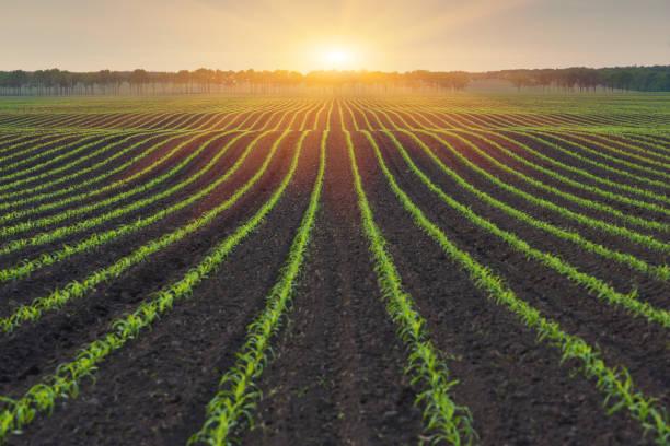 시골 풍경 - 농업 뉴스 사진 이미지