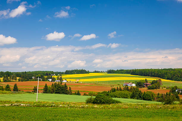 rural landscape - prince edward island stock photos and pictures