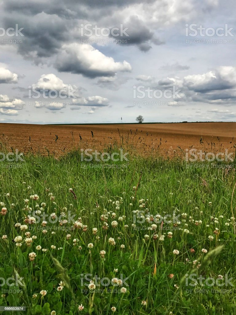 Rural landscape with  a plowed field, a lonely tree at the horizon and some grasses and wildflowers in the foreground, Vlaams Brabant,Flanders,Belgium royalty-free stock photo