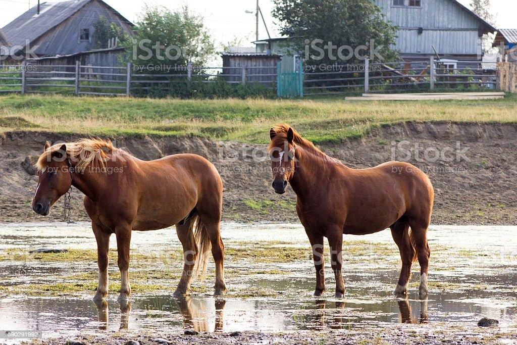 Rural landscape with horses royaltyfri bildbanksbilder