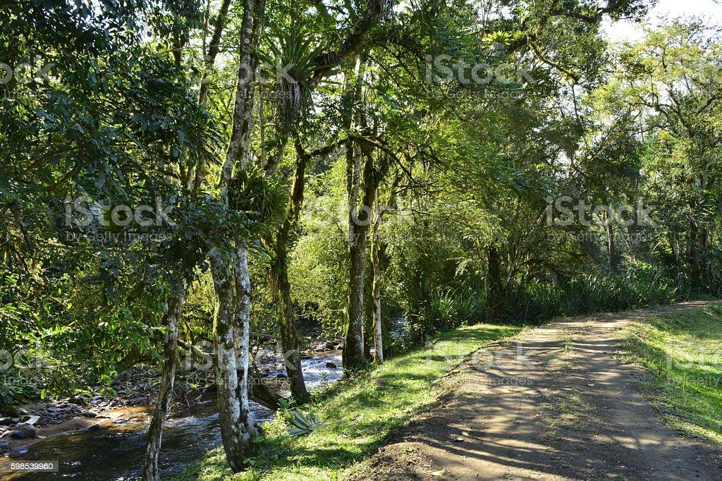 Rural Landscape with River and trees photo libre de droits