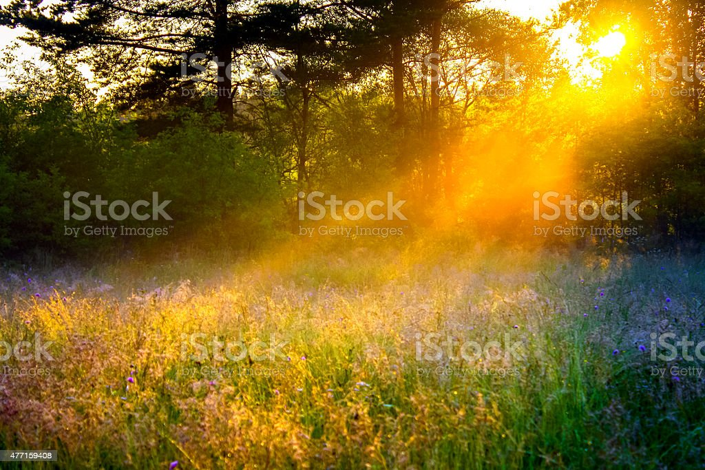 rural landscape with the sun beams  on a meadow stock photo