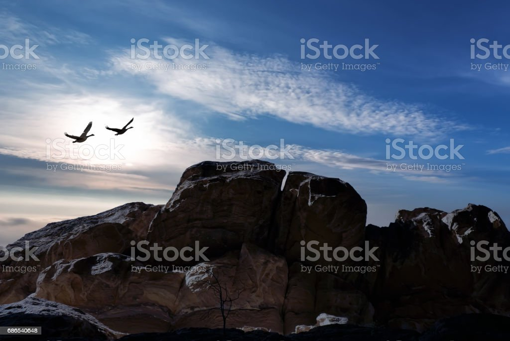 Rural mountain landscape with flying birds royalty-free stock photo