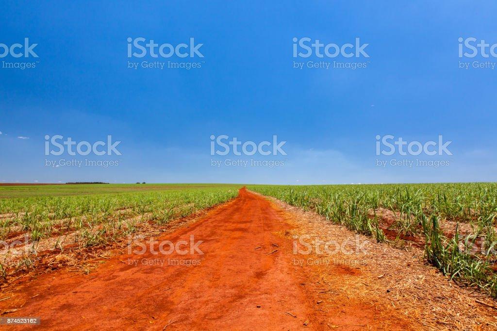 Rural orange dirt road in sugar cane plantation with blue sky and far horizon stock photo