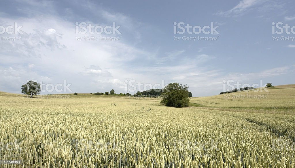 rural panoramic view at summer day royalty-free stock photo