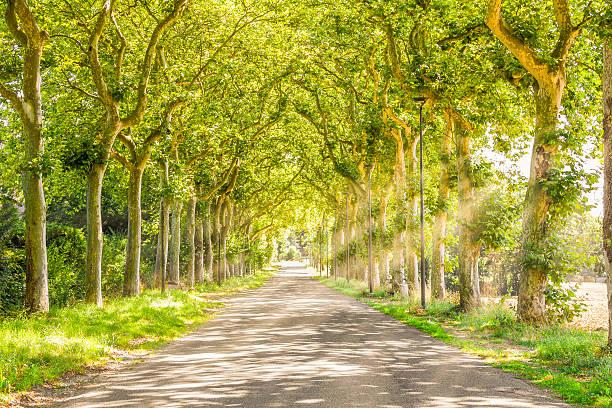 ländlichen pfad mit bäumen und sonnenstrahlen - baumwipfelpfad stock-fotos und bilder