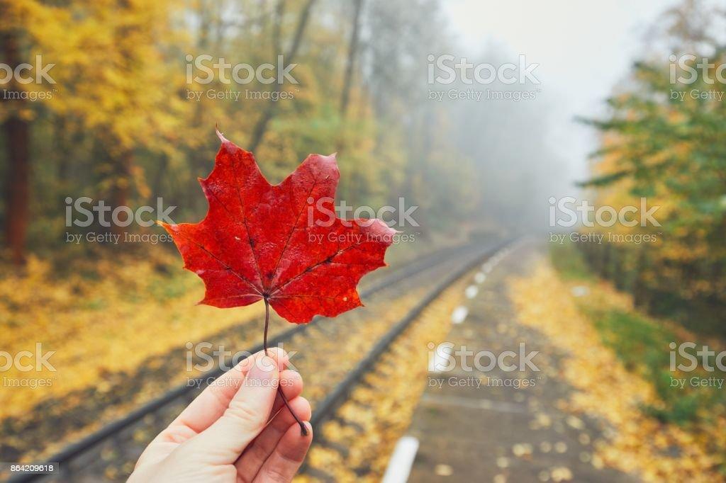 Rural railway station in autumn fog royalty-free stock photo