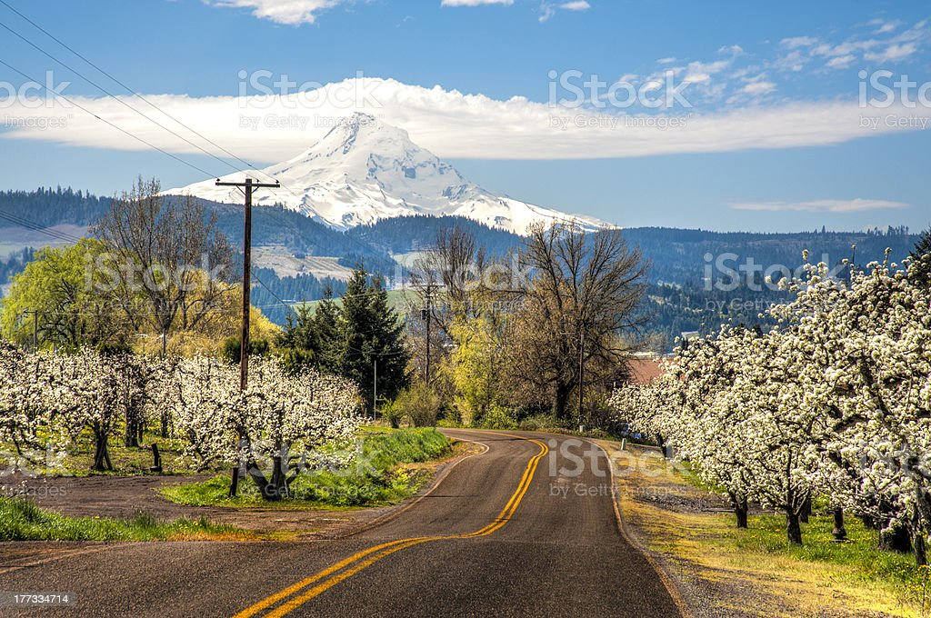 Rural road, apple orchards, Mt. Hood stock photo